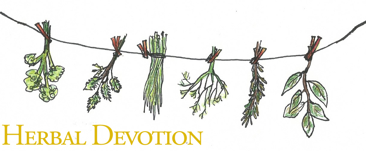herbal devotion illustration copy